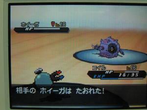 ポケモンバトル画面 自分コイルLv16 相手ホイーガLv18