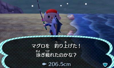 マグロを釣り上げた! 泳ぎ疲れたのかな? 206.5cm