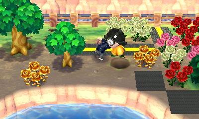 おいしいフルーツを同じ場所に植える