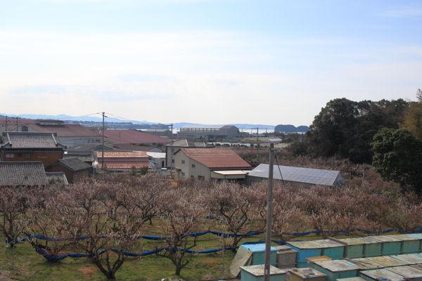 梅畑(岩代~南部駅間)