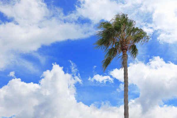 青空と椰子の木