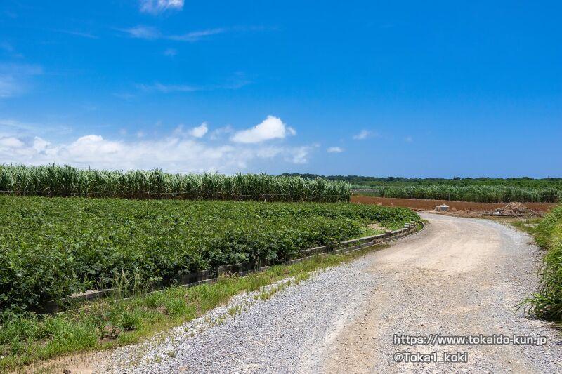 サトウキビ畑が広がる道
