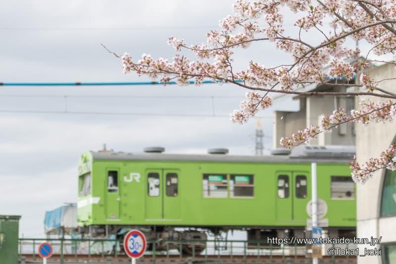 103系電車と桜