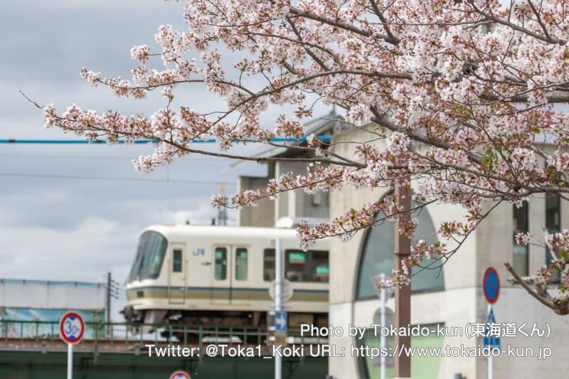 221系と桜